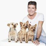 Simon Cowell Joins Cruelty Free International Global Campaign To End Dog Experiments
