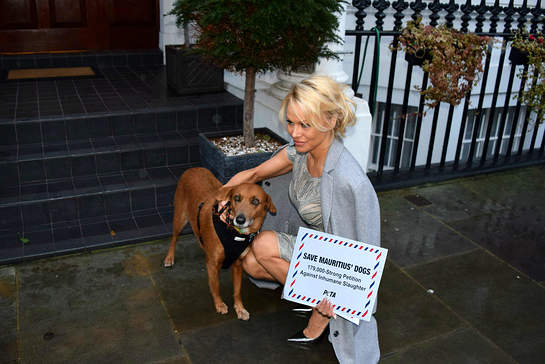 PAMELA ANDERSON TAKES PLEAS OF THOUSANDS TO PARADISE ISLAND HIGH COMMISSION