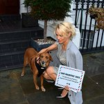 Pamela Anderson Delivers Petition Calling For Mauritius To Stop Dog Cruelty