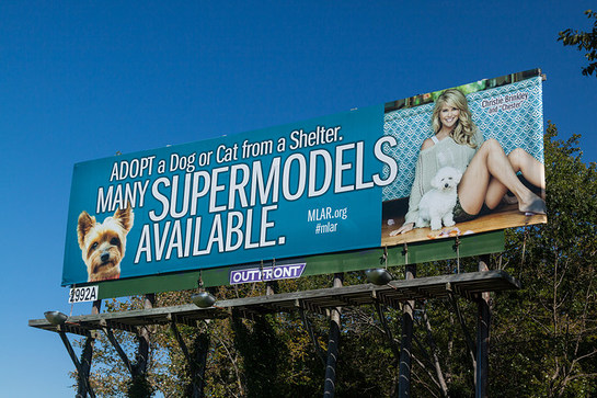 Christie Brinkley Main Line Animal Rescue Billboard