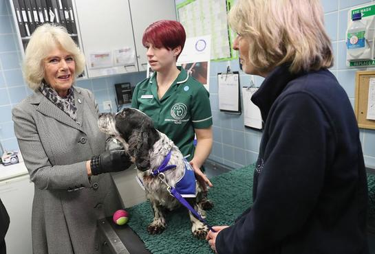 The Duchess of Cornwall visits Battersea Dogs and Cats Home Old Windsor centre
