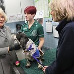 Duchess Of Cornwall Named New Royal Patron Of Battersea Dogs And Cats Home