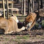 Born Free USA, Ian Somerhalder Foundation Repurpose Fur For Animals In Need