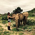 Maggie Q On A Quest To Save Elephants With The David Sheldrick Wildlife Trust