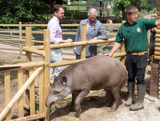The Prince of Wales meets Teddy the South American Tapir during his visit to Jimmy's Farm