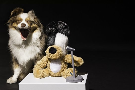 Sia's Lickalike – a new limited-edition BARK Original dog toy in partnership with singer-songwriter, Sia