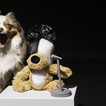 Sia Co-Designs Dog Toy Benefiting Animal Haven's Recovery Road