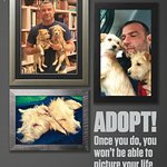 Liev Schreiber and His Hurricane Harvey Rescue Pups Are Now PETA Pinups