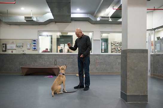 Patrick Stewart visited the ASPCA Canine Annex for Recovery and Enrichment