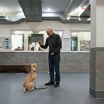 Patrick Stewart Visits ASPCA Canine Annex For Recovery And Enrichment For National DogfightingAwareness Day