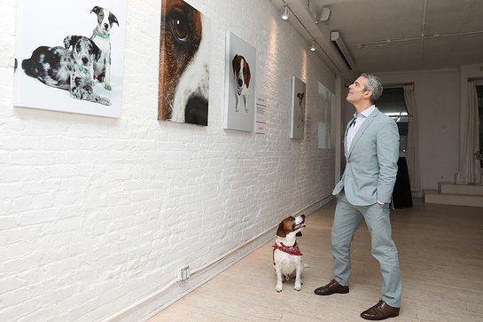 Andy Cohen admires the visible differences he's seen in Wacha by feeding Purina ONE at Gallery 28 in New York City
