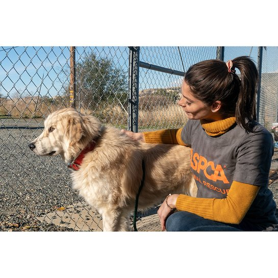 Ashley Greene volunteers at an emergency shelter with the ASPCA to help care for animals displaced by the Camp Fire