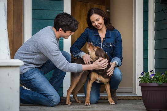 Ashley Judd - A Dog's Way Home