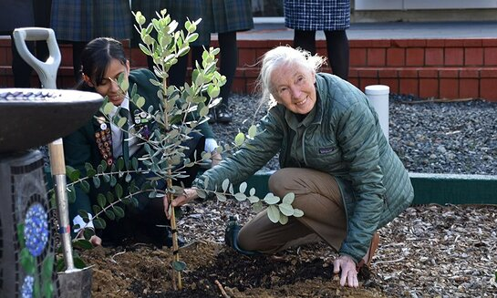 Jane helped plant trees during her visit to Marsden School in Wellington.