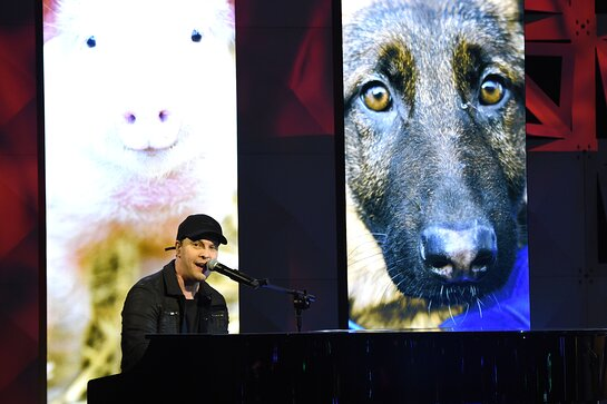 Gavin DeGraw performs on stage at the HSUS 'To the Rescue!' Gala 2019.