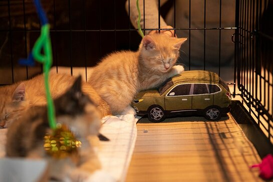 Adoptable kittens from the ASPCA's NYC Adoption Center greeted guests and honorees.