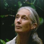 Photo: Jane Goodall