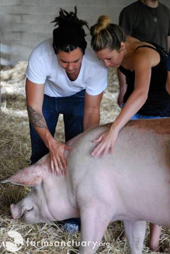 Colbie Caillat Visits Farm Sanctuary