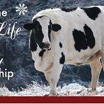 Adopt A Farm Animal For Christmas
