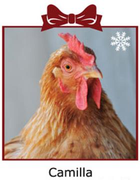 Farm Sanctuary Chicken