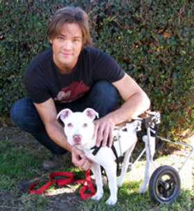 Jared Padalecki and rescue dog