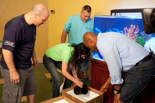 Pauley Perrette, star of NCIS flanked by Animal Planet's Tanked stars Brett Raymer and Wayde King, shows The Insider host Kevin Frazier (far right) how to move fish into the aquarium