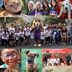 Mario Lopez To Host Charity Fun Run For Animal Welfare