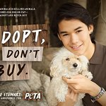Twilight Saga Star Goes To The Dogs For Homeless Animals