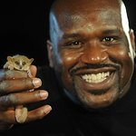 Shaq Helps Highlight Giant Threat To Tiny Primates