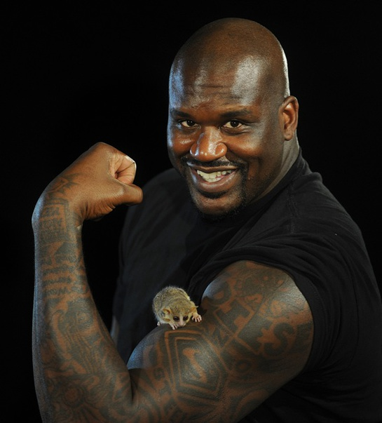 Shaq poses with Mouse Lemur