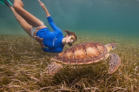 Kate swims with sea turtles in Belize