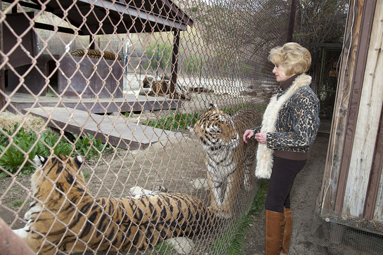Tippi Hedren with Tigers