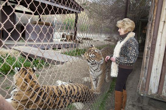 Tippi Hedren with Tigers