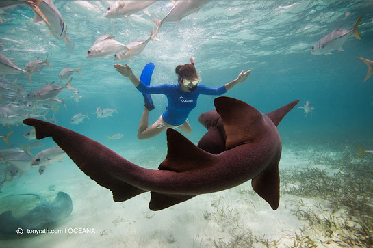 Kate Walsh swims with a nurse shark in Belize