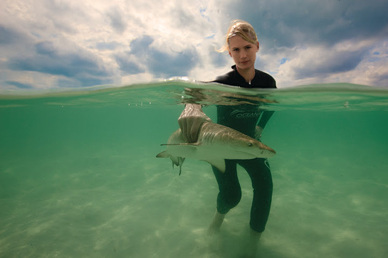 January Jones get's a hand on shark protection in the Bahamas