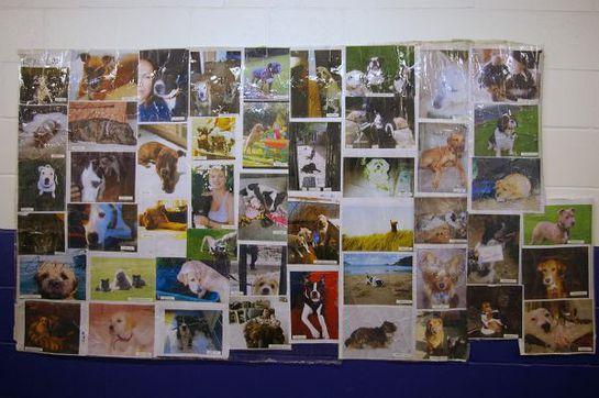 George Michael's Dog Photo Wall