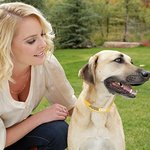 Katherine Heigl Launches Pet Products To Benefit Animal Welfare Programs