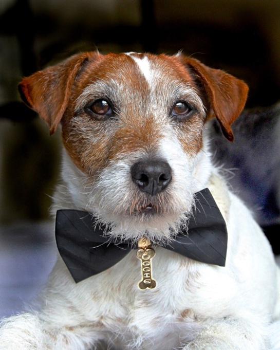 Uggie Pets of Valor Award