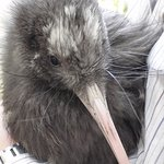 Rachel Hunter's Kiwi Chick Released Into The Wild