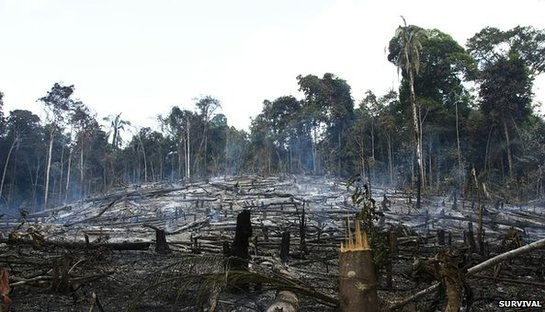 Destruction in the Awá homeland