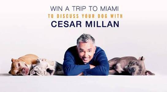 Meet Cesar Millan!