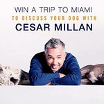 Your Chance To Discuss Your Dog With Cesar Millan