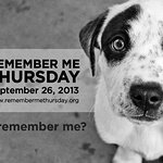 Stars Unite For Animal Welfare On Remember Me Thursday