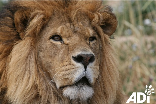 One of the stars of Lion Ark, The Movie