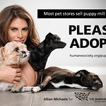 Jillian Michaels Says No To Puppy Mills In Humane Society Billboard