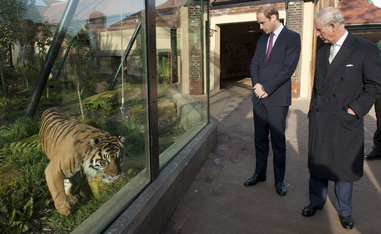 The Prince of Wales and The Duke of Cambridge tour the tiger enclosure ahead of a meeting of 'United for Wildlife' at the Zoological Society of London