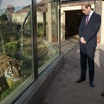 Prince Of Wales Joins Duke Of Cambridge For Tiger Conservation