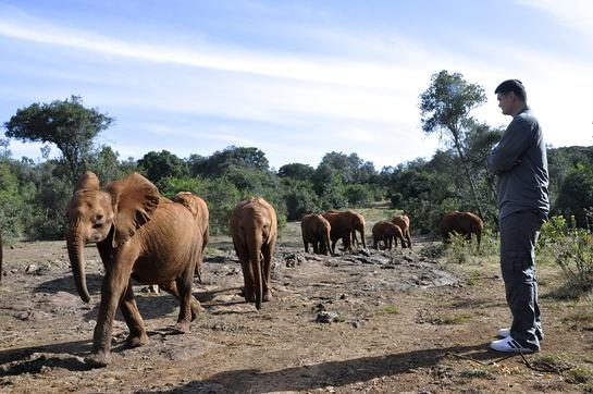Yao Ming watches a parade of orphan elephants at the David Sheldrick Wildlife Trust.