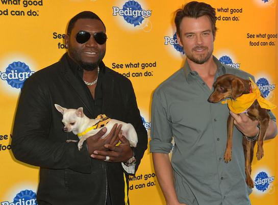 On January 20, 2014, shelter dog ambassadors David Ortiz and Josh Duhamel kicked-off the PEDIGREE Brand See what good food can do campaign at the Sundance Film Festival.