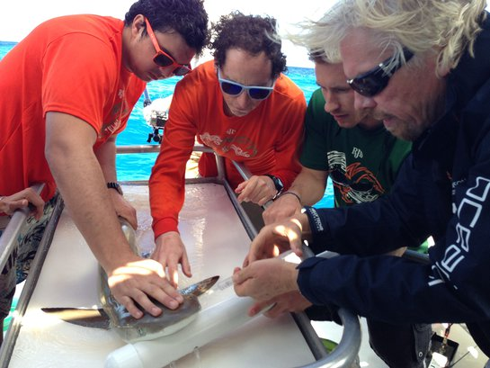 Richard Branson Helps Tag The First Shark In The BVI